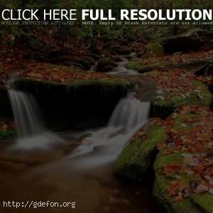 Камни, листья, осень, ручей