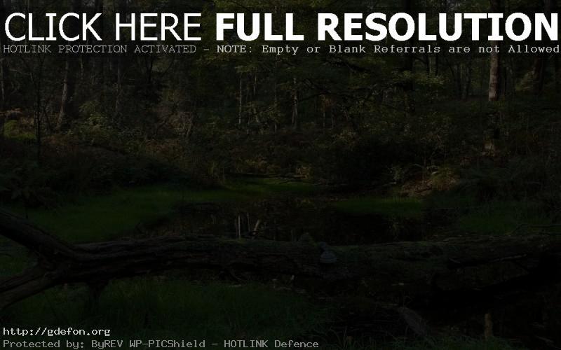 Обои ручей, лес, деревья фото картики заставки