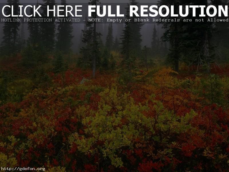 Обои Лес, туман, осень фото картики заставки
