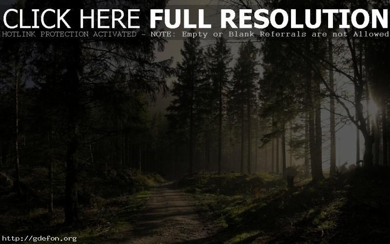 Обои Лес, дорога, солнце, лучи, свет фото картики заставки