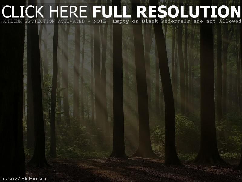 Обои Лучи света сквозь деревья фото картики заставки