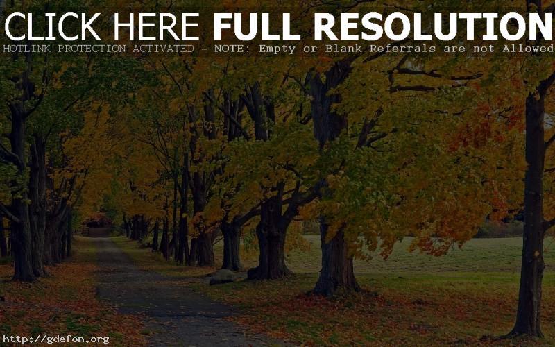 Обои деревья в осеннем одеяние фото картики заставки