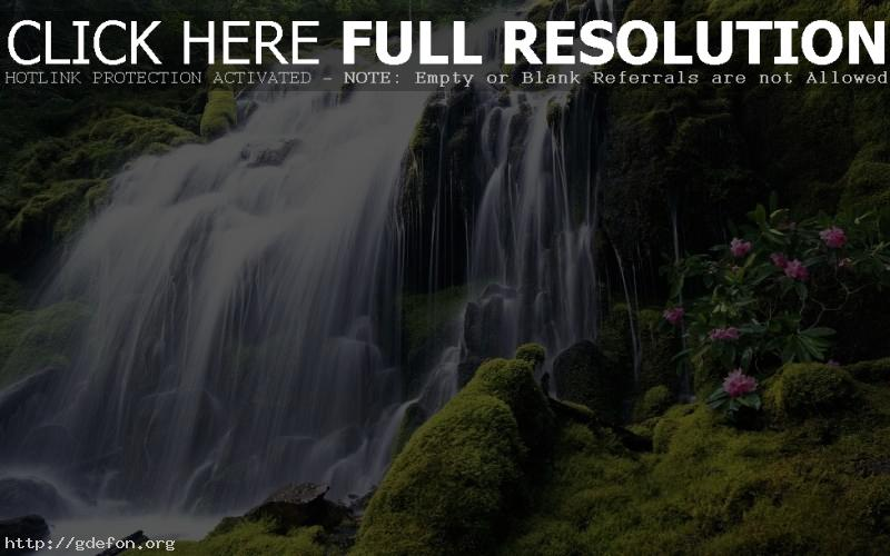 Обои водопад, мох, цветы фото картики заставки