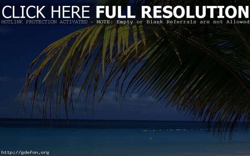 Обои Пляж, море, ветка фото картики заставки