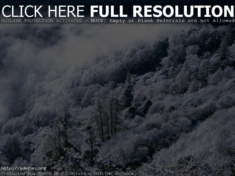 Обои Зима, лес, горы, туман фото картики заставки