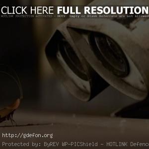 Валли и таракан