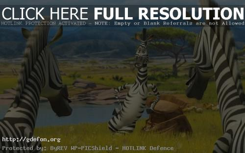 Обои Мадагаскар, зебра Мартин фото картики заставки