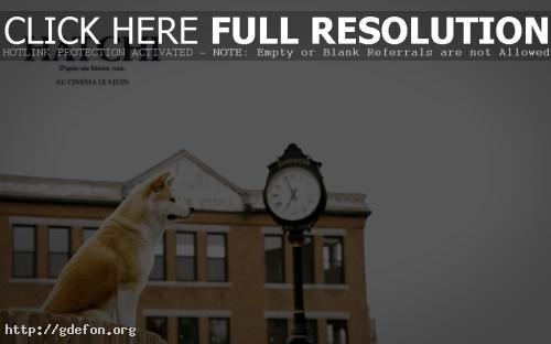 Обои Верный пёс — Хатико Самый верный друг фото картики заставки