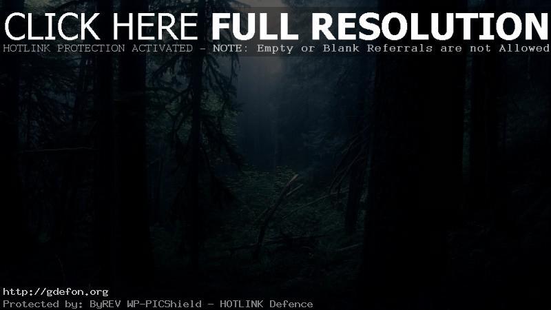 Обои Темный лес фото картики заставки