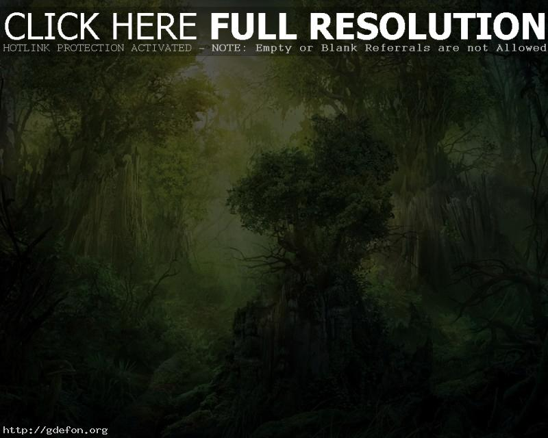 Обои Лес, деревья, скала фото картики заставки