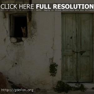 дверь, стена, окно, кошка