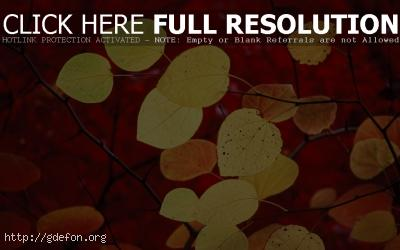 Обои Красный, листья, осень фото картики заставки