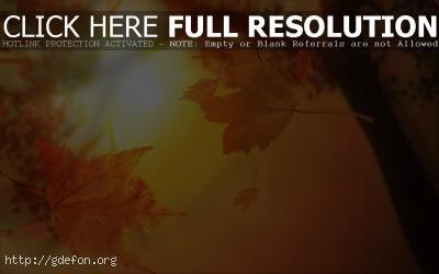 Обои Листья, осень, солнце фото картики заставки