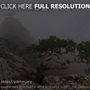 скала, туман, деревья