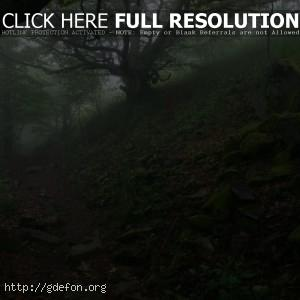камни, тропа, деревья, туман