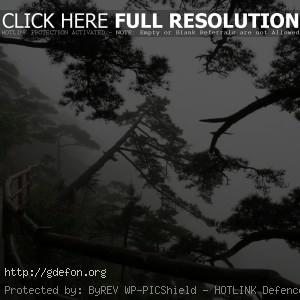 Деревья, тропа, туман