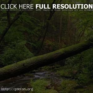 Дерево, лес, листва, вода