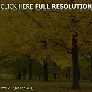 Осень, деревья, листья, желтое