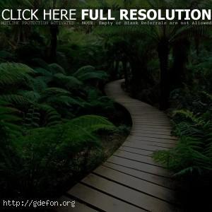 Тропа, папоротники, растения