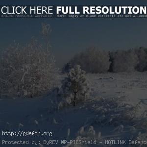 Снег, зима, дерево