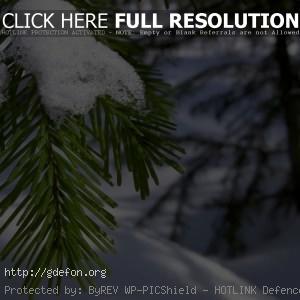 Ветка, хвоя, иголки, снег, зима, макро