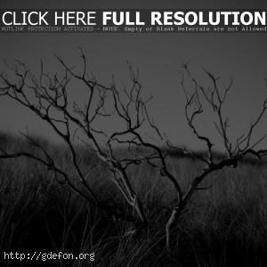 черно-боле фото засохшего дерева