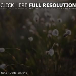 растения, макро