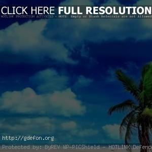 Верхушка пальмы