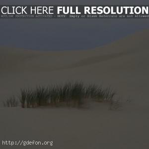 Пустыня, трава, песок