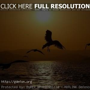 Птицы над водой