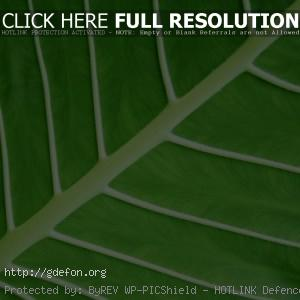 Зеленый стебель