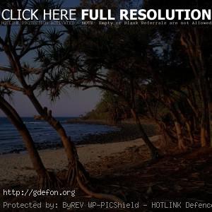 Деревья, море, пляж, берег, корни