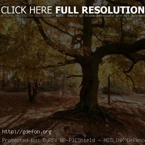 Дерево, лес, листья