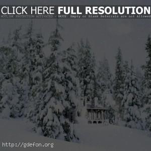 Заснеженный домик в лесу