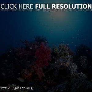 океан, свет, солнце, кораллы