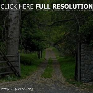 Лес, ворота, дорога