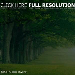 Деревья, аллея, парк, лето, утро, туман