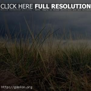Трава, поле, небо, макро