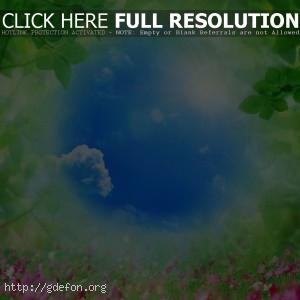 Небо, трава, цветы, листья, природа