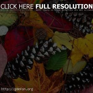 Листья, шишки, осень, краски, красота