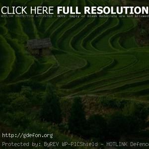 Поле, трава, дом