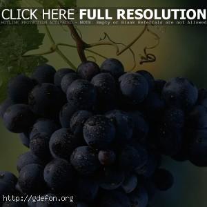 красивая гроздь винограда