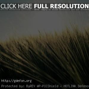 пшеница, поле, лето, небо, солнце