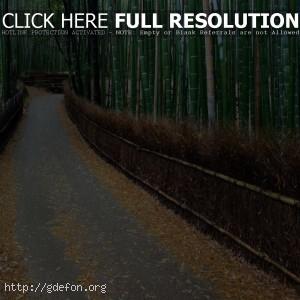 Аллея, бамбук, ограда