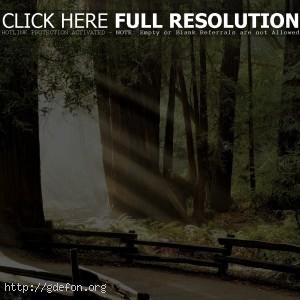 Дорога через древний лес