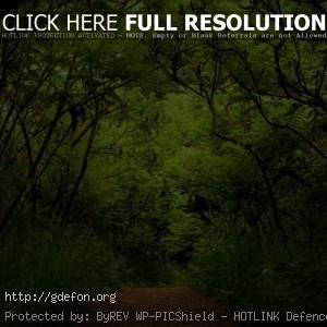 Природа, лес, зелень, растения