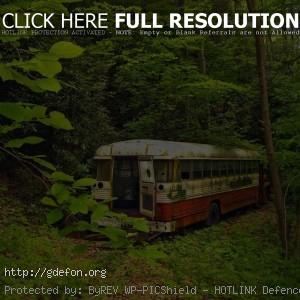 Старый автобус, лес, зелень