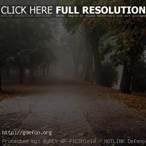 Осень, парк, листья, туман