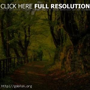 Лес, деревья, листья, дорога