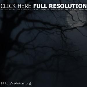 Ночь, дерево, луна, туман